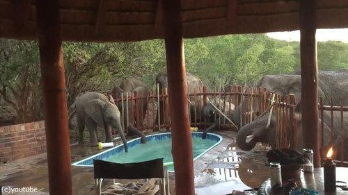 プールの水を飲む野生動物04
