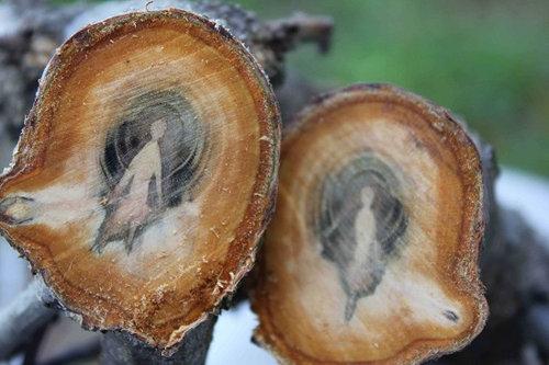 アプリコットの木