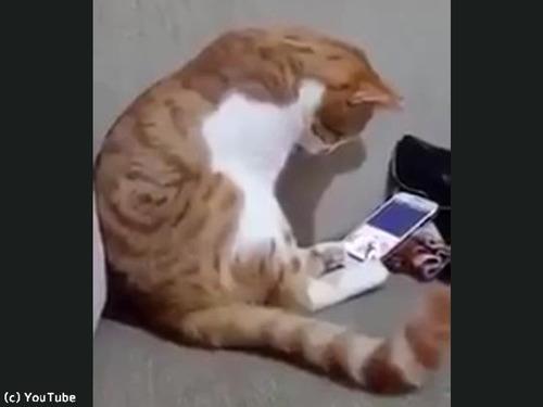 今は亡き飼い主さんの動画を見た猫がとった行動00