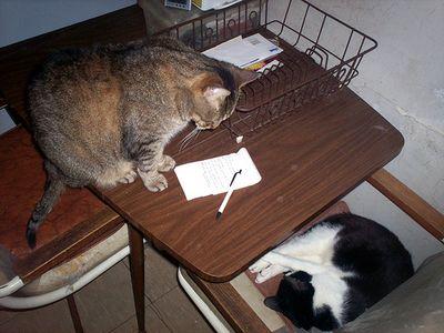とても賢そうなインテリ猫たち12