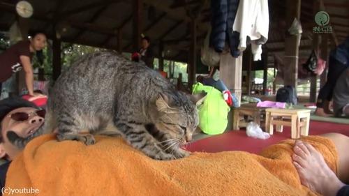 タイの猫マッサージ師02