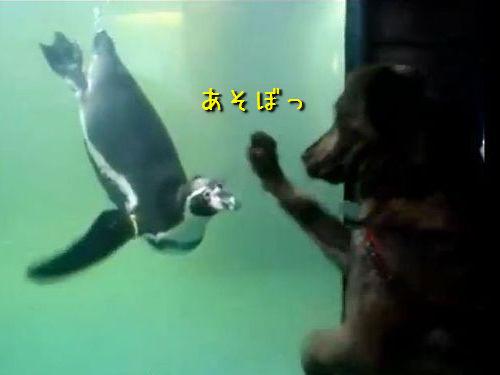 犬とペンギン