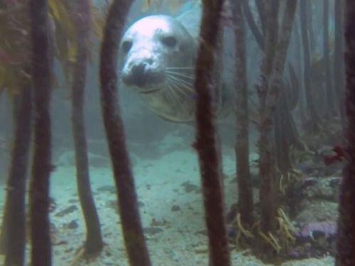 海中でアザラシと仲良くなった01