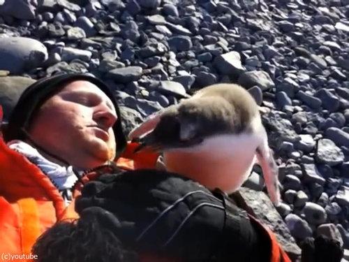 ペンギンのひなが乗ってきた02