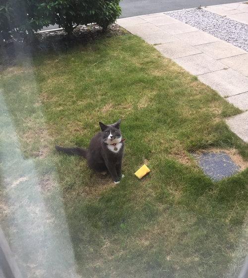 うちの猫が毎回持って帰ってくるもの03