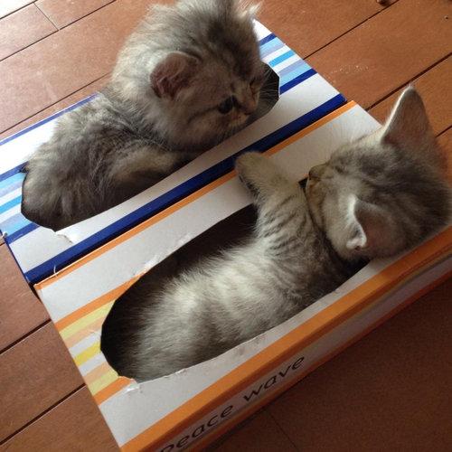 07Box・箱や入れ物に収まる動物たち