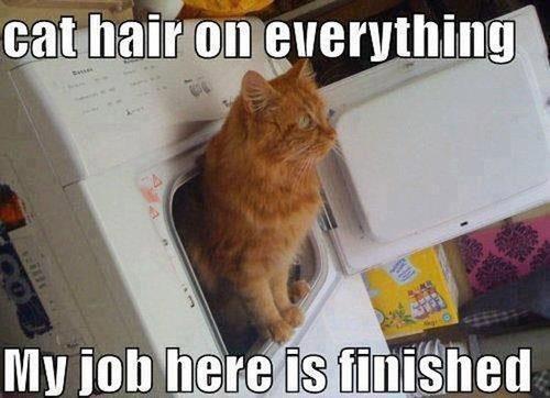 猫の飼い主が知っておきたいこと18