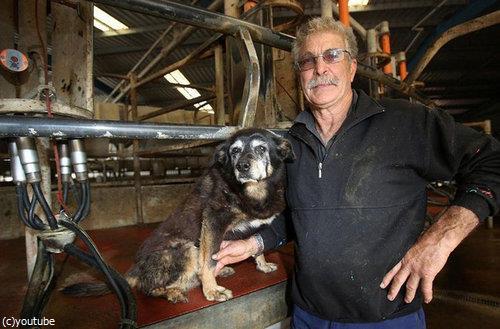 最高齢の犬マギーが亡くなる01