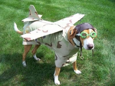 酷い犬のコスプレ11