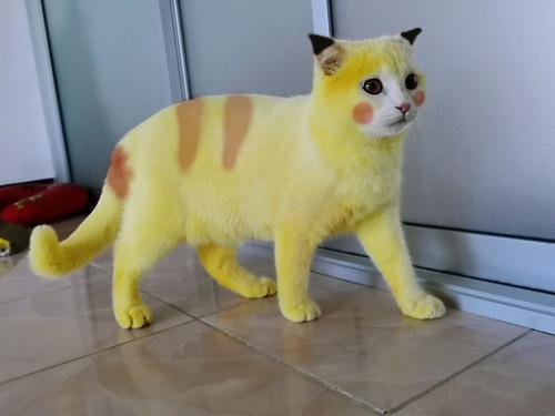 治療のウコンでピカチュウ化した猫08