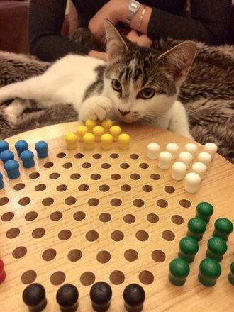 猫をぎゅーっとしたくなる写真02
