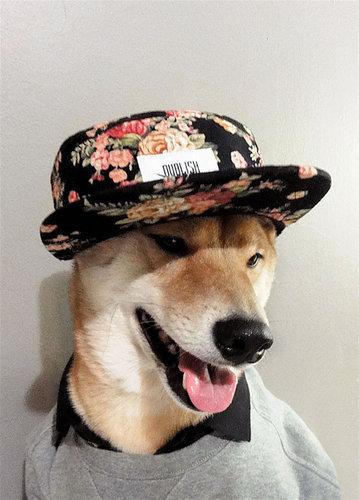 柴犬を飼う理由13