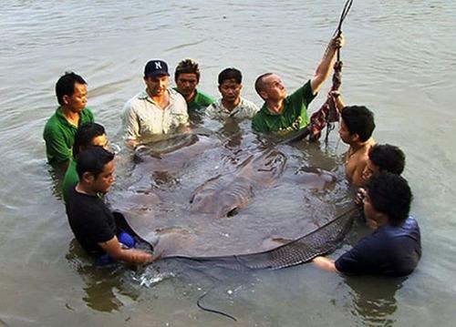 巨大な生き物15