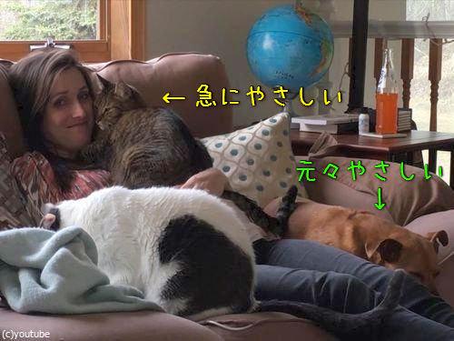 主産間近の飼い主→猫が急にやさしくなった00