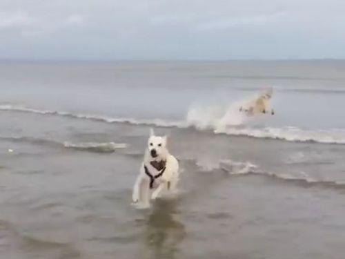 犬の水切り04