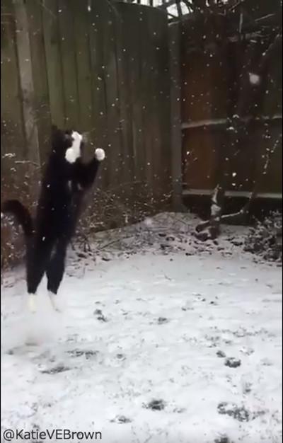 雪をキャッチするにゃんこ02