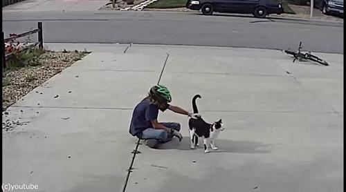 近所の少年は毎日うちの片目の猫を撫でにやってくる04