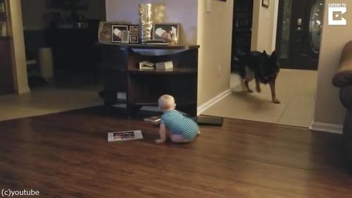 追いかけっこする赤ちゃんと犬05
