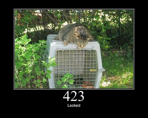 猫でHTTPステータスコード18