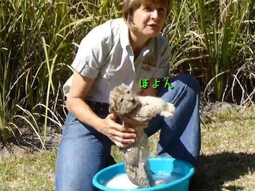 ライオンの赤ちゃんの洗い方