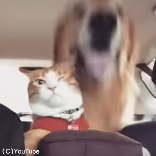 犬と猫のお出かけ05