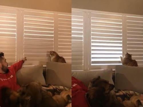 猫、お父さんに反抗する01