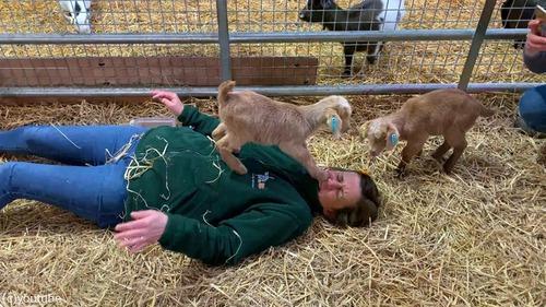子ヤギと遊ぶ飼育員さんを襲ったキュートなハプニング02