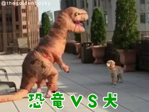 恐竜が犬に襲い掛かってきた!00