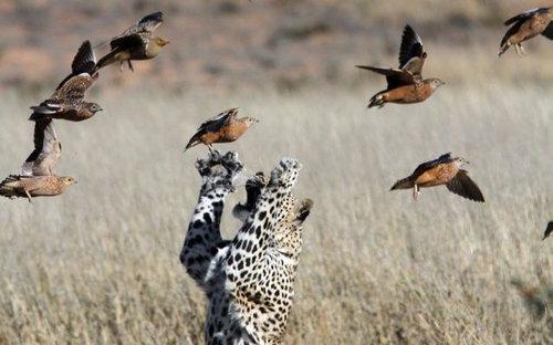 16動物たちの闘い
