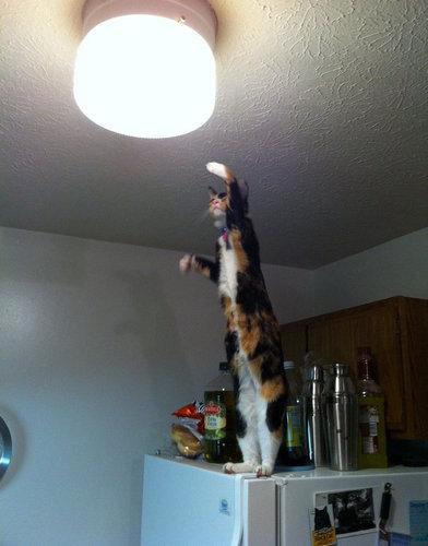 すごい猫02