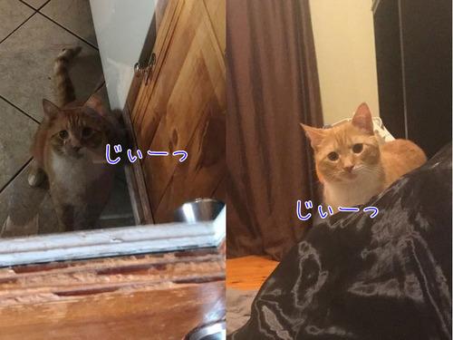 猫が見つめてくる00