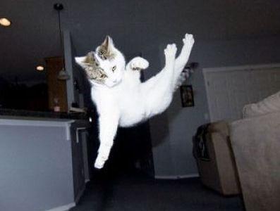 猫ジャンプ01