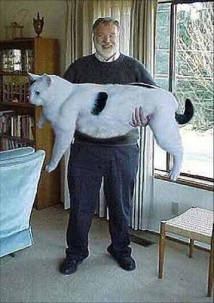 実在した巨大生物・白猫