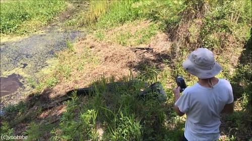 フロリダのワニに襲われる09