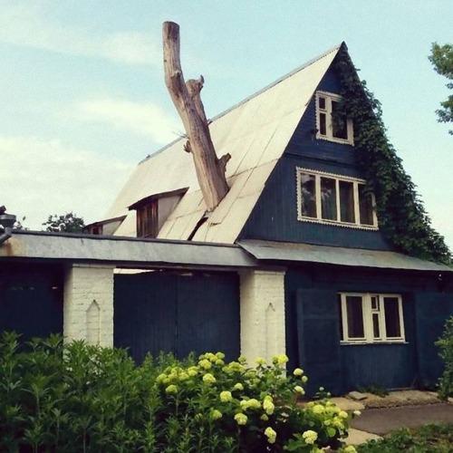 家を建てるために木を切らなかった人々12