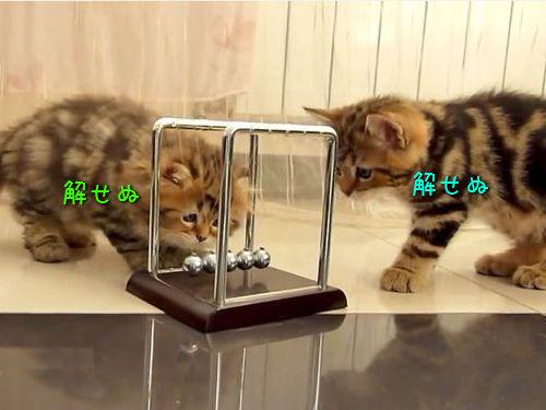 物理を知った子猫たち00