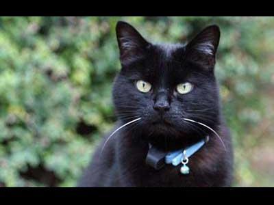 猫の鈴で小鳥を救う