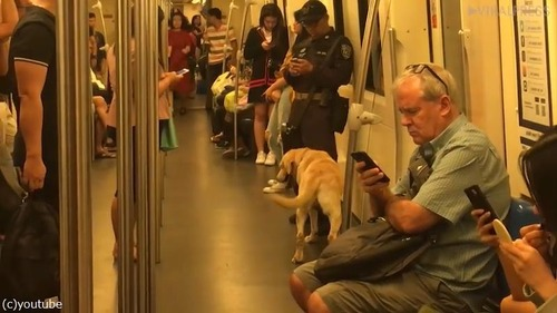 麻薬犬が地下鉄でリラックス02
