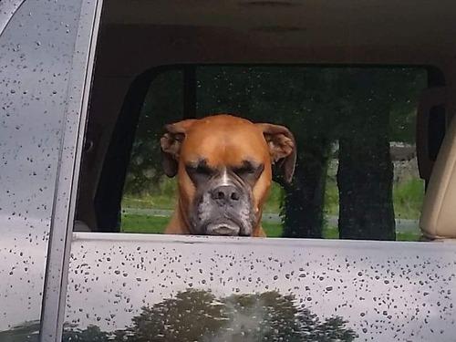 公園から帰りたくない犬02