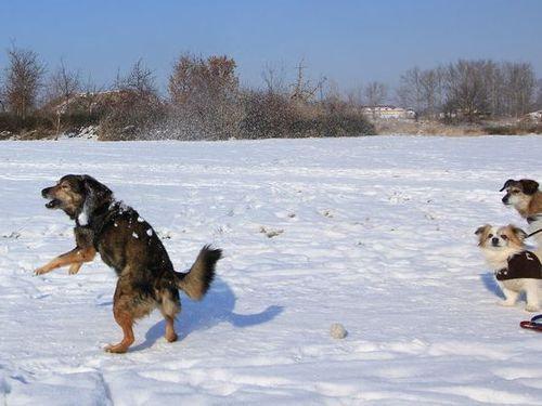 雪を喜ぶ動物00