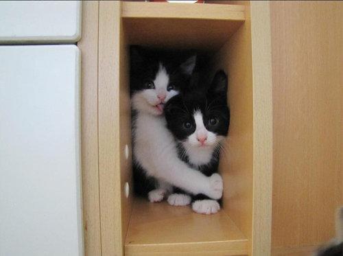 密談する猫たち06