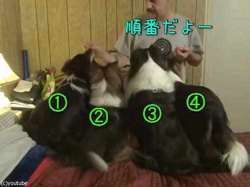 食いしん坊な犬の知恵00