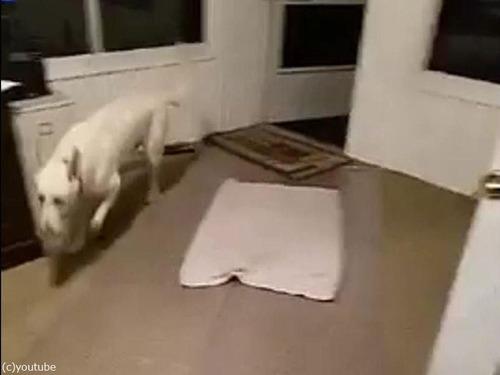 犬と敷物04