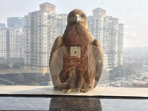 窓の外の鳥01
