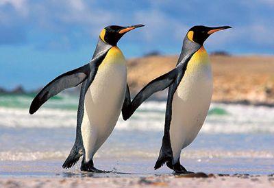ペンギンのおてて繋ぎかわいいよかわいいよ〜辛抱たまらんのです。