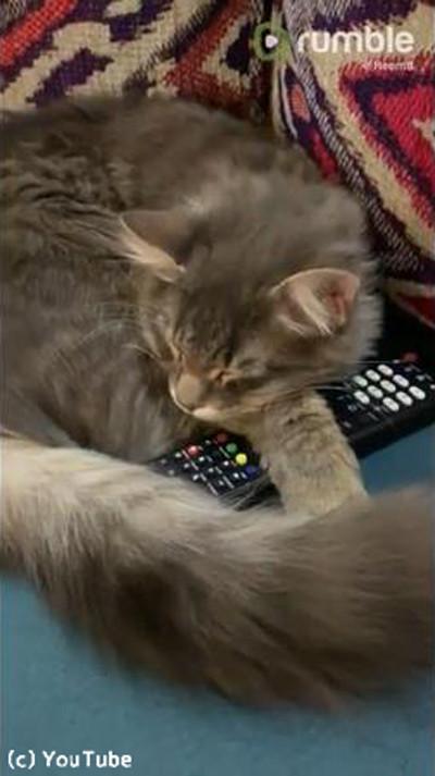 アレを抱き枕にする猫03