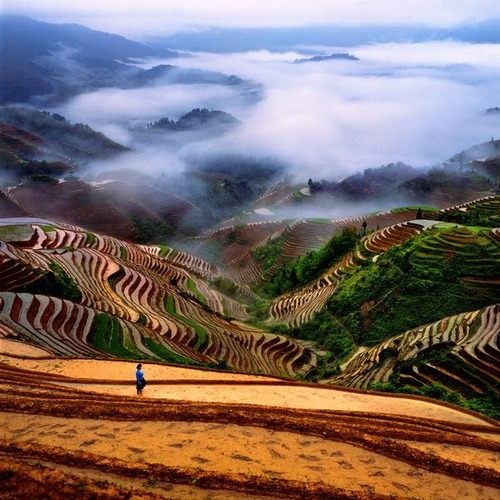 絵画みたいな中国の田んぼ04