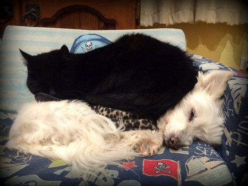 誰にも心を開かなかった犬が、猫と親友に07