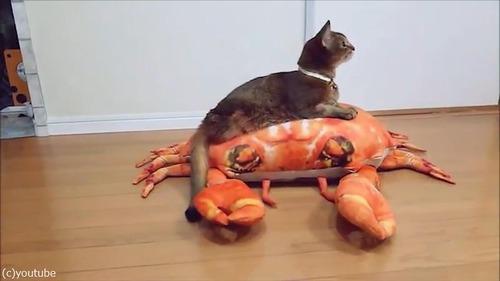 後ろ足のない猫の移動方法が斬新02