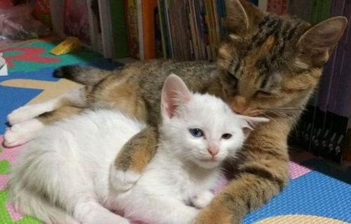 ママ猫が子猫を寝かしつける一部始終01